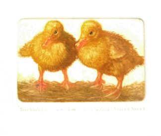 Duckling Etching by Valerie Christmas
