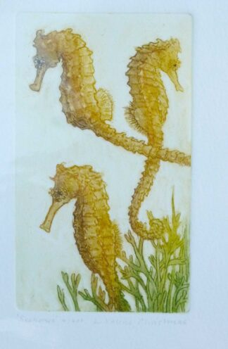 Seahorses etching by L Valerie Christmas