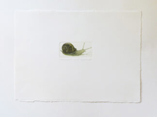 Snail etching by Valerie Christmas