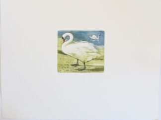 Etching of Swans by L. Valerie Christmas